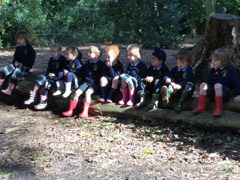 Forest School 1